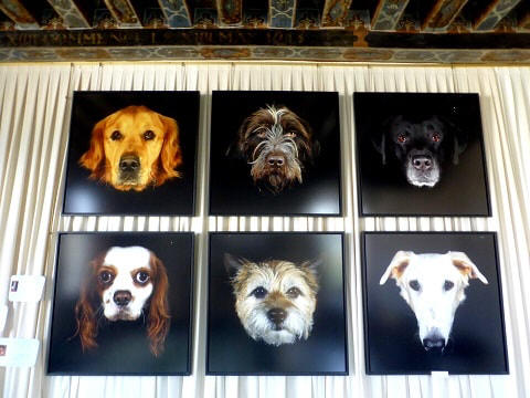 celeb  dog portraits in Chateau Beauregard in the Loire Valley in France