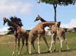 Offre promotionnelle zoo de beauval